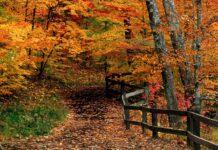 Παρθένο Δάσος Φρακτού